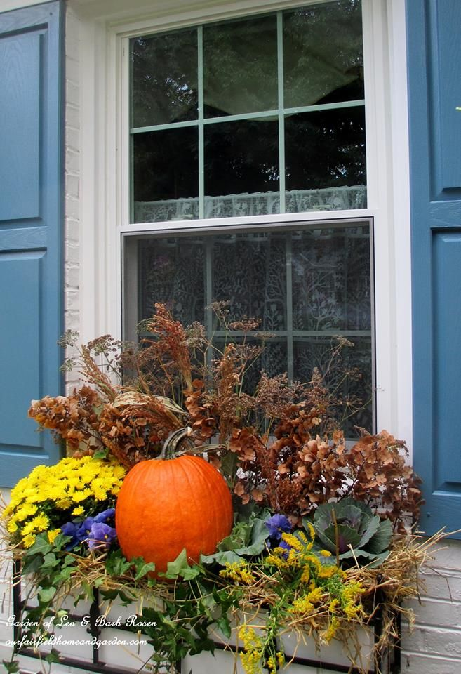 Fall Window Box made with hay, a pumpkin, winter pansies, a mum, ivy and dried seed pods & flowers from the garden (Garden of Len & Barb Rosen)