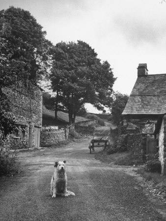 Collie sheepdog sitting in road leading up toward Castle Farm owned by Beatrix Potter (this image comes from the historical archives of LIFE magazine)