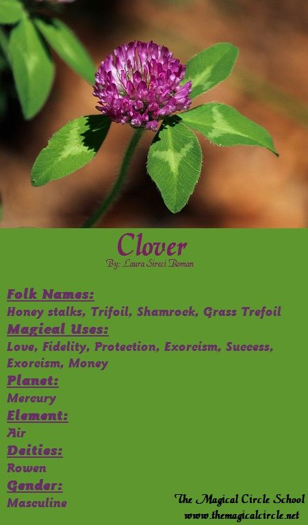 Clover Magical Properties - The Magical Circle School - www.themagicalcircle.net