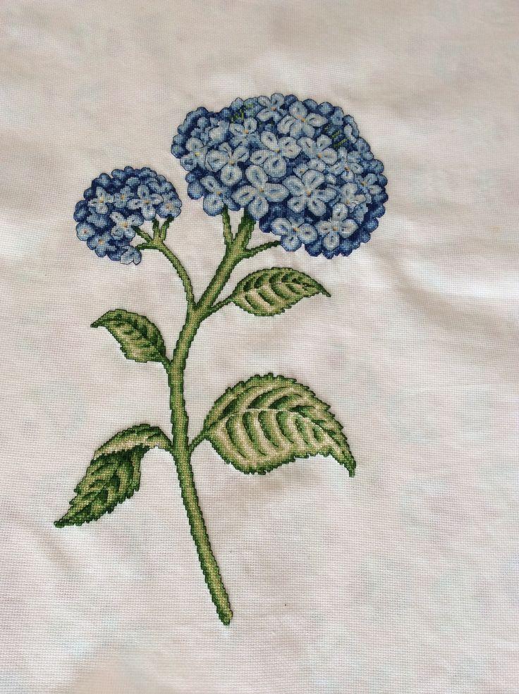 Blue hydrangea - mavi ortanca