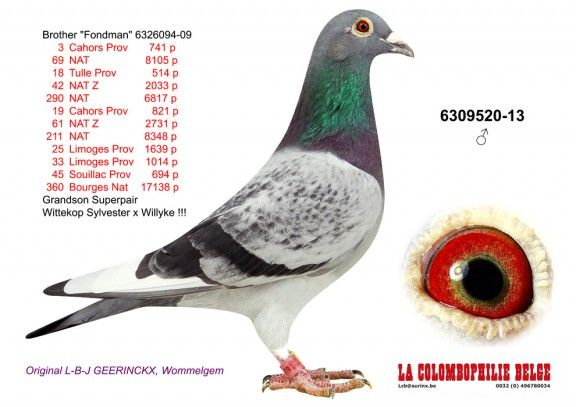 6309520-13 • L-B-J Geerinckx
