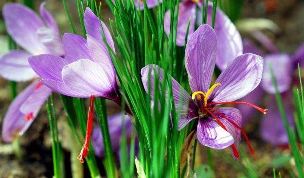 Quali fiori vuoi far crescere nel tuo giardino?