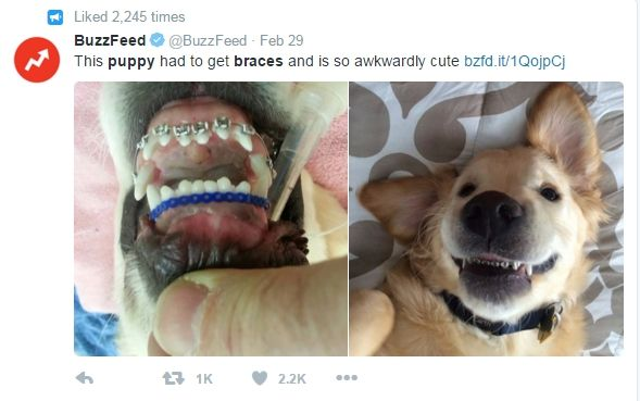 Adorable dog becomes Internet star after receiving braces to fix teeth