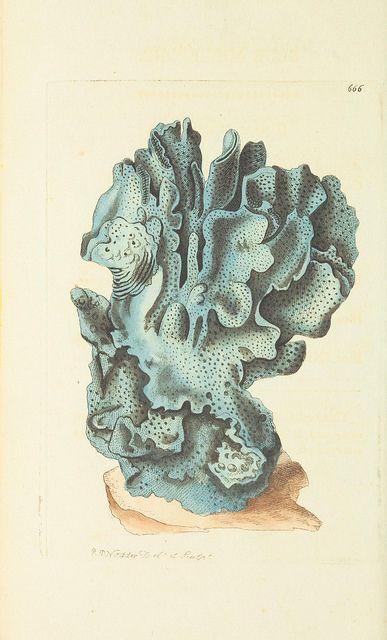 17 Images About Sea Sponge Love On Pinterest Deep Sea