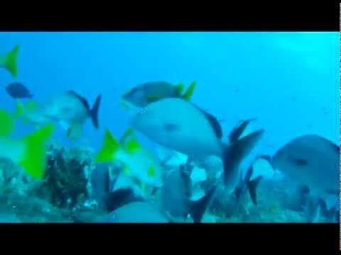 Más De Ideas Increíbles Sobre Diving Videos En Pinterest - An alien world lurks beneath in this creepy cave diving video
