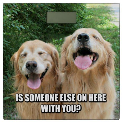 Funny Golden Retriever Jemand anderes hier Badezimmerwaage #augiedoggystore #cut …   – Softball meme