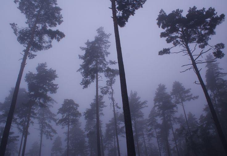 MOUNTAIN MOOD | Kat von Rose ||  BLOG details: http://kat-von-rose.blogspot.com/2016/11/mountain-mood-photography.html  #forest #fog #blue #woods #mystical #magical #foggy #alone #nature #dark #landscape #trees #meadow #aesthetics