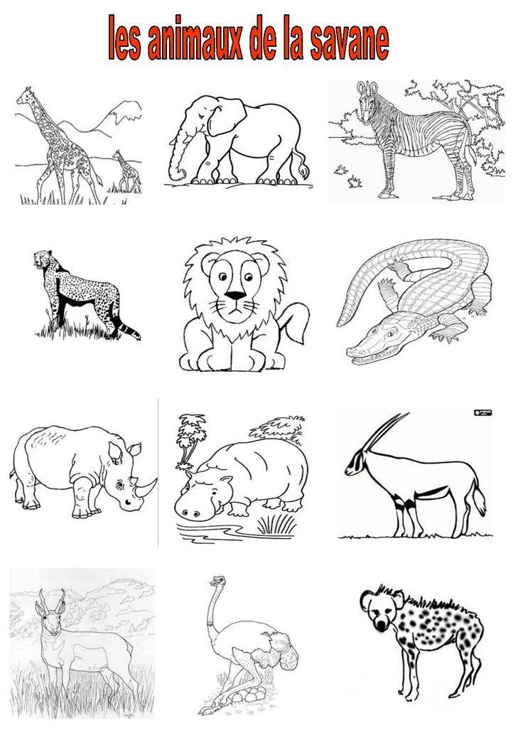 Les 10 meilleures images du tableau carnaval des animaux - Animaux de la jungle maternelle ...