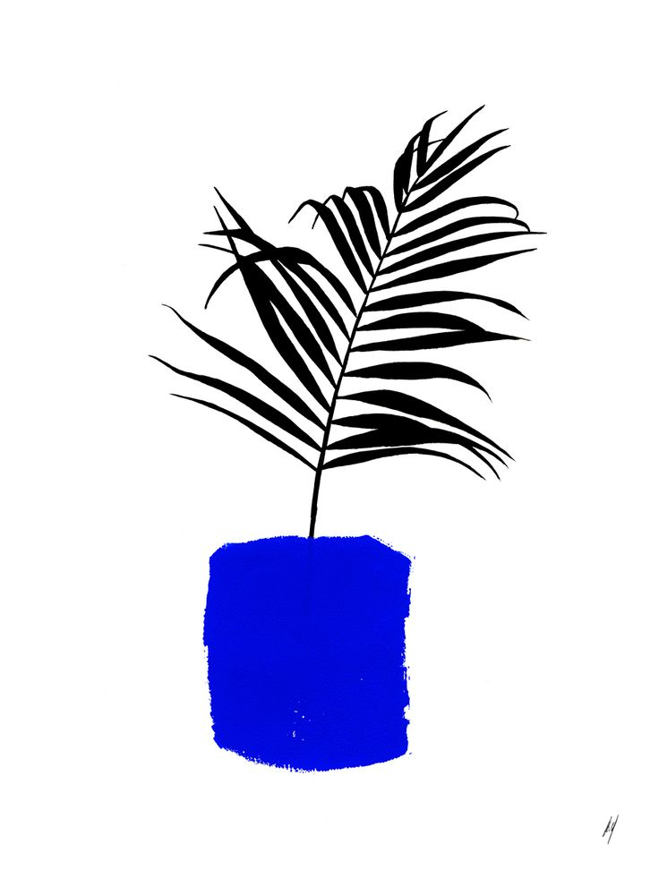 Blue Pot, plant illustration by Amanda Mocci, prints available