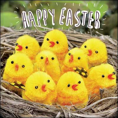 Chicks in a nest #Easter card.  The card is left blank inside for your own greeting.