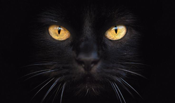 gatos_05
