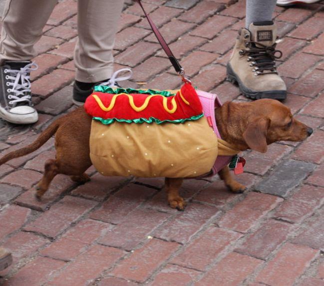 """Potwory, Lord Vader i... pies """"hot dog"""". Reporter 24 w mieście czarownic. http://kontakt24.tvn24.pl/najnowsze/potwory-lord-vader-i-pies-hot-dog-reporter-24-w-miescie-czarownic,184315.html"""