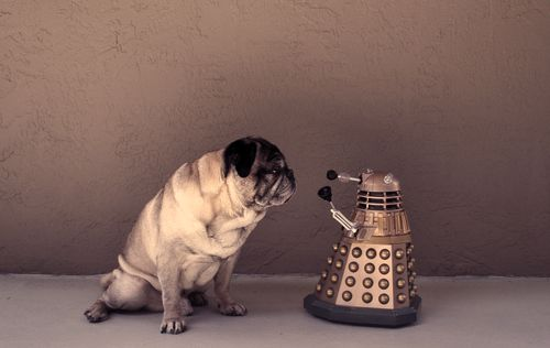 Doctor Who: Inquir Pugs, Pugs Poses, Miniatures Dalek, Things Pugs, Doctors Who, Fun Funny, Doctorwho Shakes, Funny Fun, Animal