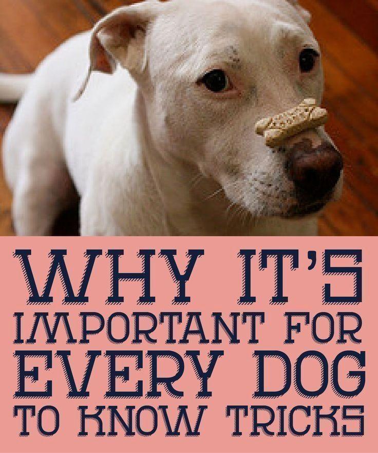 10 Pro Tips For Dog Training By Experts Dog Training Advice Dog