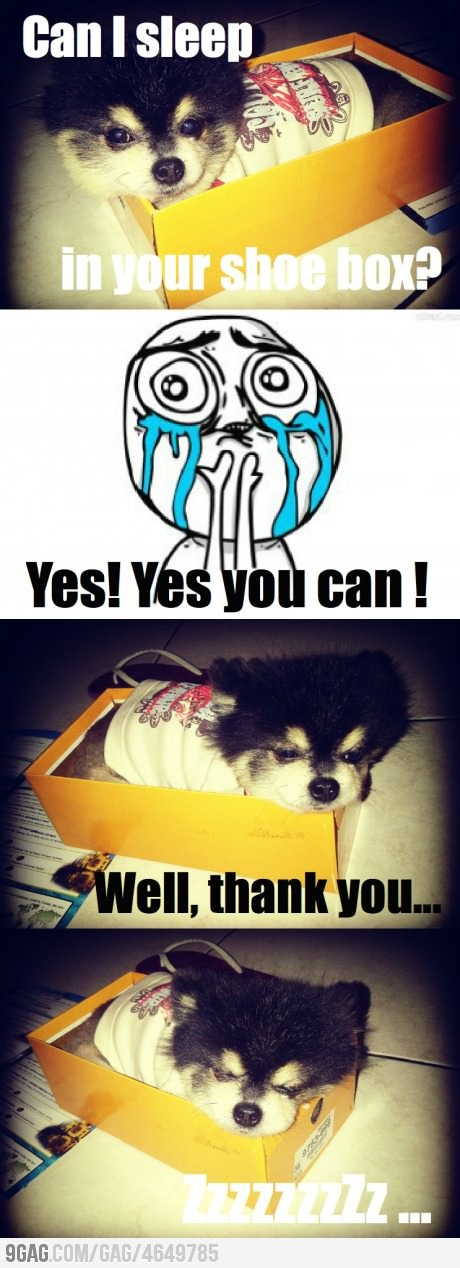 Overslept on my owner's shoe box (Cuteness lvl: Overload)Funny Comics, Owners Shoes, Shoes Boxes, Funny Pics, Boxes Beds, Funny Jokes, Funny Photos, Funny Dog Pictures, Funny Dogs Pictures