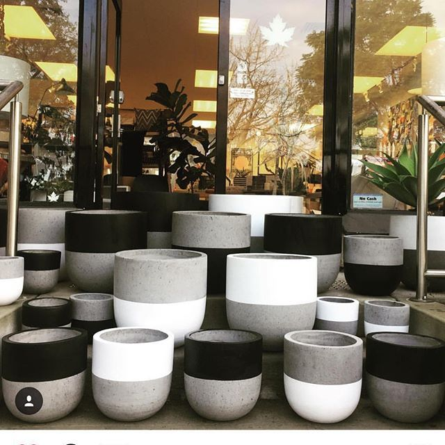 New shipment of @ontheside_ pots has just arrived at @maplehomewares ! Drop past and grab your favourite! #pots #ontheside #concretepots #concreteplanter #handpaintedinmelbourne #maplefullarton #homewares #plants