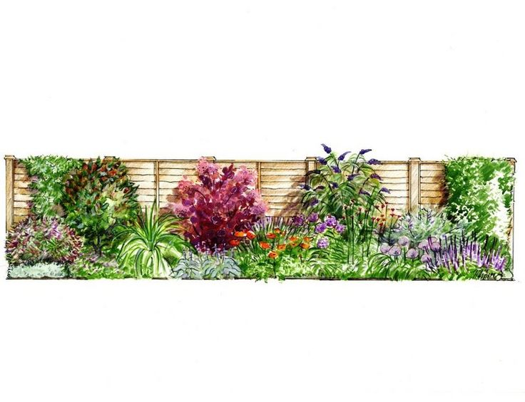Sample Front Elevation Landscaping : A series of planting elevations for the 'garden on roll