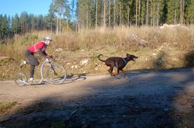 Kickbikes can also be partnered with man's best friend.  This is becoming one of the fastest growing activities/ sport in Canada.The dogs truly love to pull.