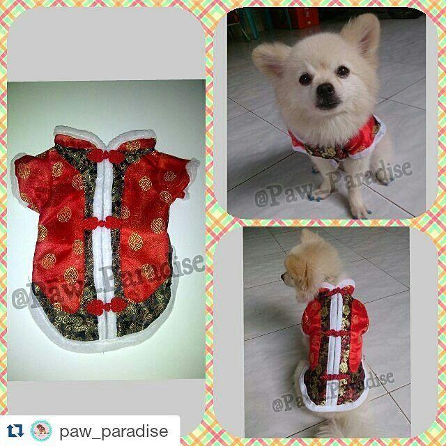 """@paw_paradise Dog/Cat Lovers Yuk intip instagram yang satu ini.. Yang cari kebutuhan hewan kesayangan mu anjing dan kucing. Mulai dari aksesoris baju snack mainan dll.  Kualitas bisa dijamino No Tipu""""!! Penasaran?? Langsung aja follow instagram nya @paw_paradise @paw_paradise @paw_paradise  Bisa langsung kontek bio juga untuk order/ tanya"""": BB Pin : 2BE7D0D7 (Helen)  Whatsapp: 087885171332 #kalunganjing #jualtaganjing #kalungnamaanjing #jualkalunganjing #aksesorisanjing #topianjing #petshop…"""