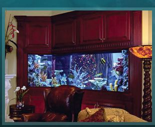 Elegant Acrylic Tank Manufacturing Of Las Vegas, Nevada | Home Of The Hit TV Show  TANKED Amazing Design