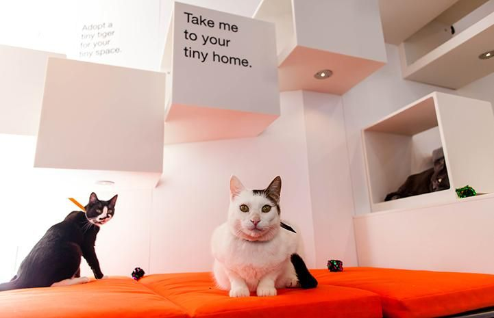 Tuna, Frida and Margarita, three felines at the Best Friends Pet Adoption Center in New York City