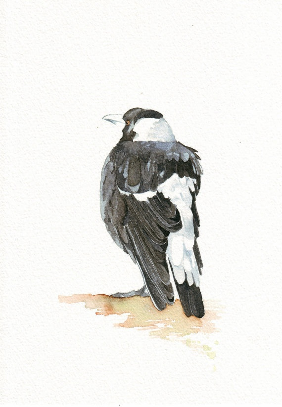 Magpie Painting  Bird Print of watercolor painting by Splodgepodge, $15.00. Australian Magpies are so unlike our British ones and they have an incredibly melodic song. Very reminiscent of our travels in Australia