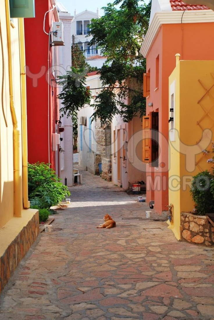 A ginger cat lays in a back street at Emborio on the Greek island of Halki.
