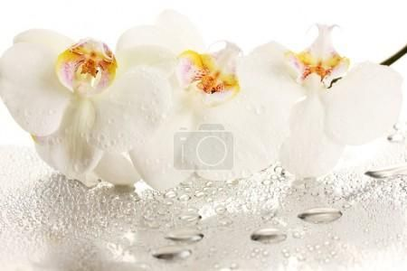 Bílý krásnou orchidej s kapkami