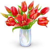 LacnýEshop Blog: 5 rastlín pre lepší spánok