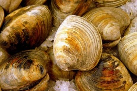 Malaysian black pepper clams
