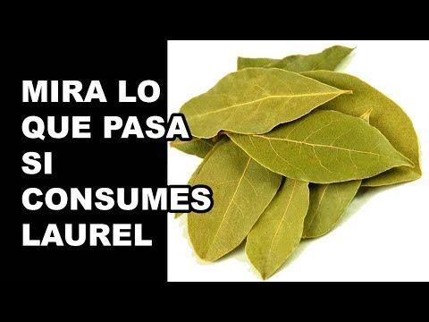 """¡MEDICOS SORPRENDIDOS! MIRA LO QUE LE PASA A TU CUERPO SI CONSUMES """""""" UNA HOJA DE LAUREL """""""" ... - YouTube"""