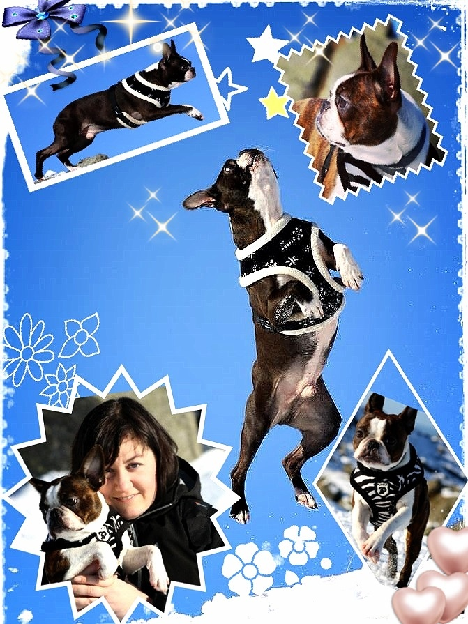 Stine og hennes hunder