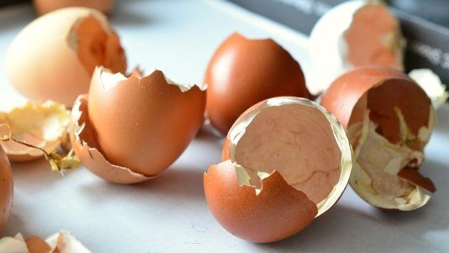 ► Itt olvashatod a teendőket: - Először vízben fel kell forralni, majd 10 percen át forrásban kell tartani a tojásokat. Ez megöli a káros baktériumokat. Aztán le kell hűteni őket szobahőmérsékletűre. Majd finom porrá kell őrölni. Megjegyzés: bizonyosodj meg róla, hogy a tojáshéj port sterilizált befőttes üvegbe helyezed. Ez a por teljes mértékben helyettesít mindenféle kalcium étrend kiegészítőt. Vagy add hozzá kedvenc turmix italodhoz, vagy gabonapelyhedhez.