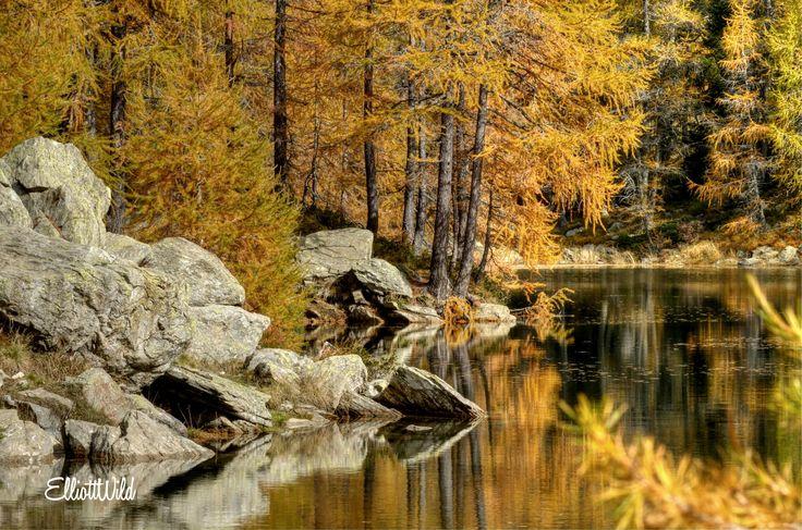 Photograph Autumn in Spluga Valley by ElliottWild on 500px