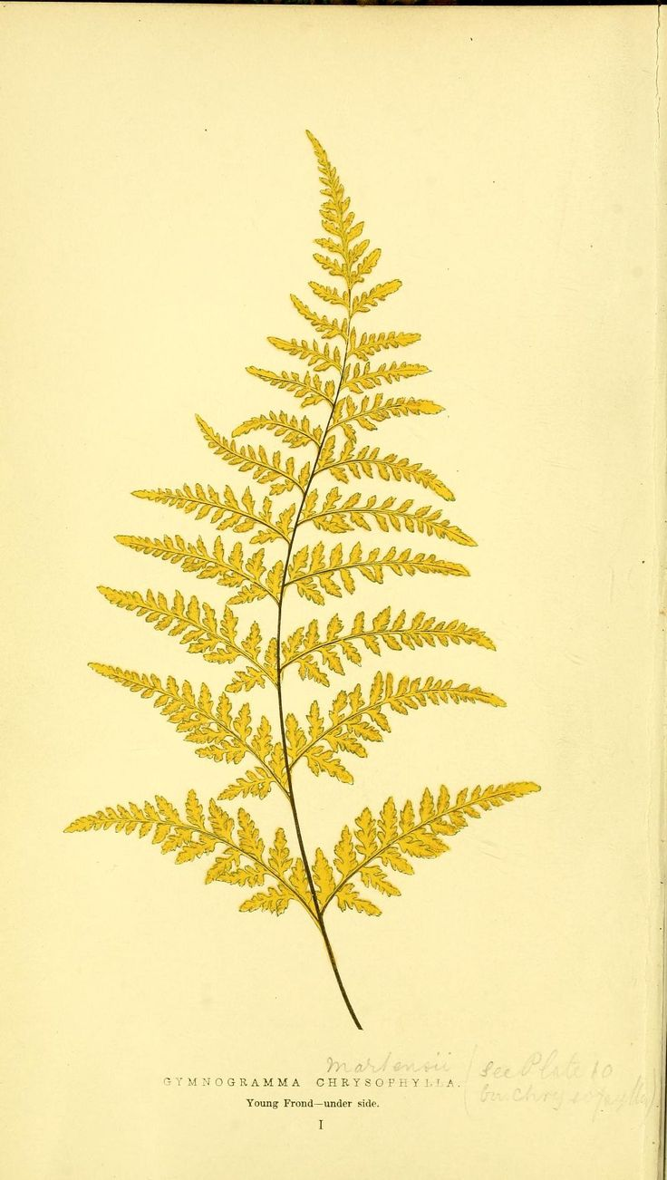 526 best images about ferns fronds croziers on pinterest for Botanical tattoo london