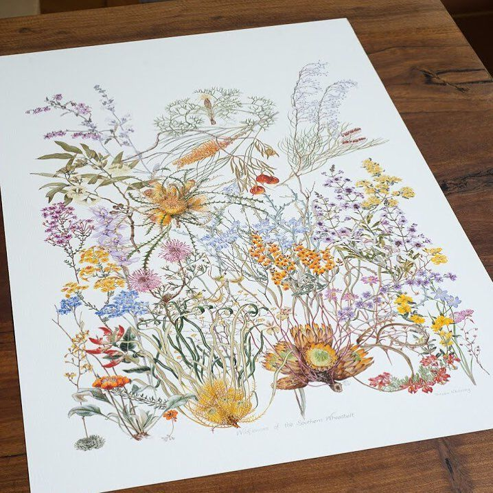 """53 Likes, 5 Comments - Philippa Nikulinsky (@philippa.nikulinsky) on Instagram: """"A fine art reproduction of Wildflowers of the Southern Wheatbelt is available now. • • • •…"""""""