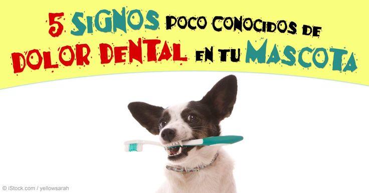 Las mascotas ocultan el dolor, incluso el dolor dental severo, por lo que es importante monitorear la salud oral de tu mascota. http://mascotas.mercola.com/sitios/mascotas/archivo/2015/10/18/dolor-dental-en-mascotas.aspx