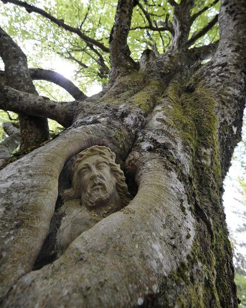 Baumwunder - Der Balzer Herrgott