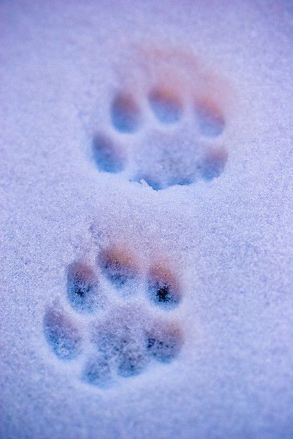 Cat paw prints....have loved these for as long as I've loved cats.