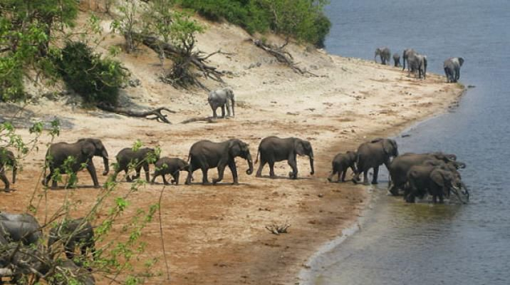 Chobe Nationalpark i Botswana - safari