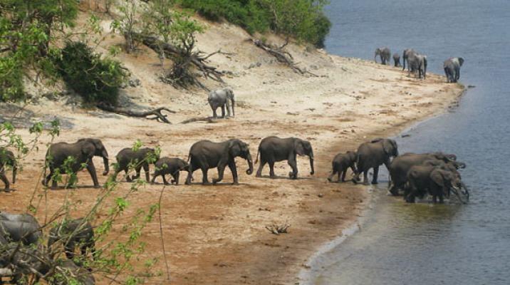 Chobe Nationalpark i Botswana - safari