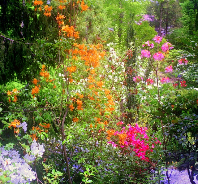 Flowers Shine After a Morning Storm  photo by Jude Nagurney Camwell: Garden Ideas, Morning Storm, Flowers Shine, Gardening Ideas, Storm Photo, Things Outdoor, Garden Thoughts