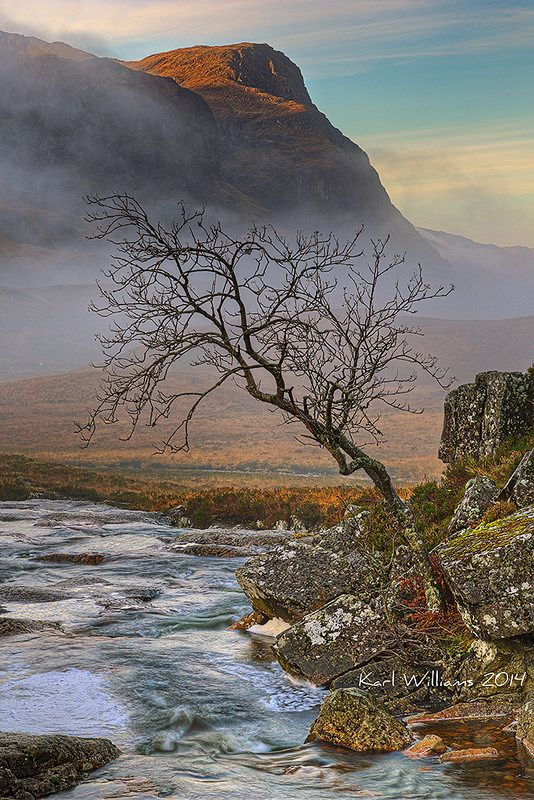 Glencoe Rowan - Western Highlands, Scotland