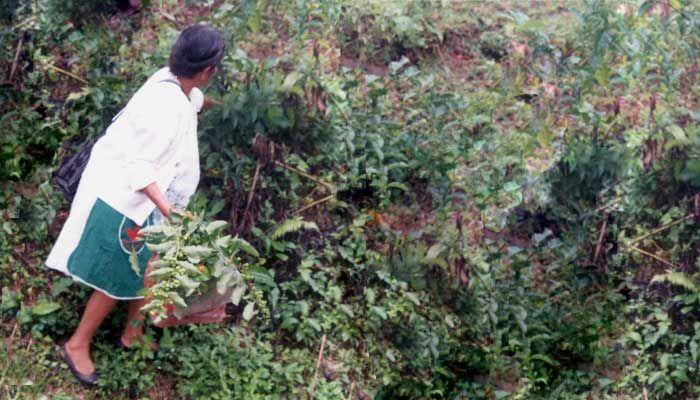 Los hñähñü son una de las etnias ocupantes del Valle del Mezquital en San Luís Potosí, que conserva su característica de pueblo cazador recolector, así, ellos convierten en comida muchos de los elementos de la fauna y flora local.  Conoce más de la tradición gastronómica hñähñü: http://suenamexico.com/experiencias/sabores/el-alimento-invisible/