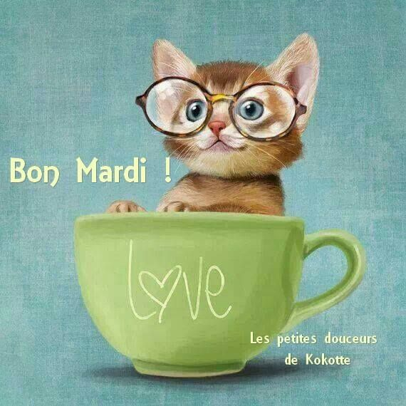 Bon Mardi ! #mardi chaton lunette tasse bon mardi humour
