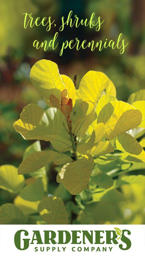 29 Best Gardener 39 S Supply Garden Centers Images On Pinterest Vermont Garden Ideas And Flower