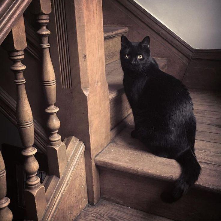 рисунки черная кошка в доме фото явно