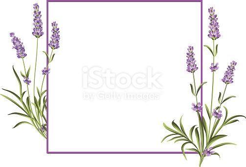 Bündel Lavendelblumen auf einem weißen Hintergrund. Hochzeitseinladung …