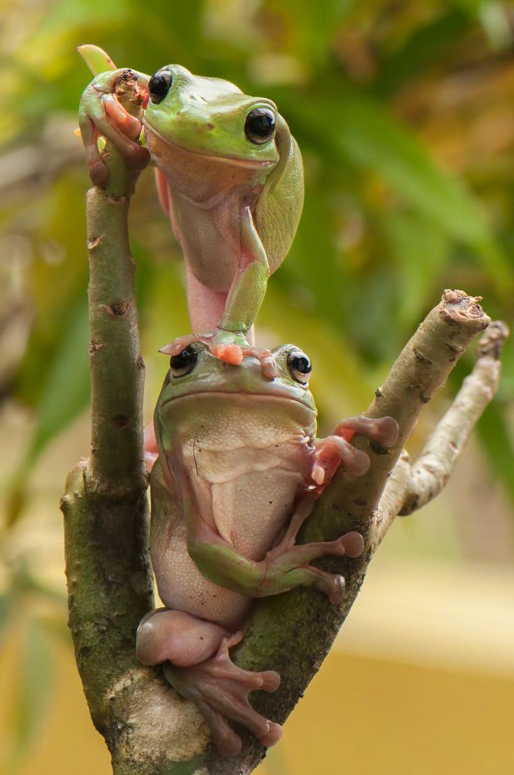 Cute Creature Alert #045: Frog Poses
