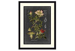 One Kings Lane - Stylish Solutions - Midnight Botanical I